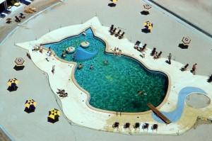 piscine chat