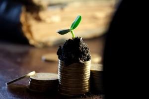 pile de pièces de monnaie terre et plante verte