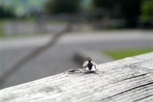 comment débarasser mouches