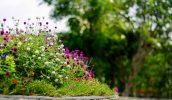 Sécuriser son jardin pour en profiter au mieux