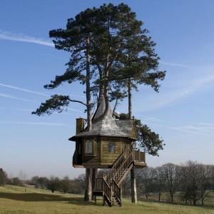 Maison dans un arbre